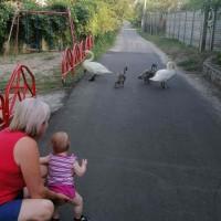 Отдых в деревне у бабушки: интересное времяпровождение